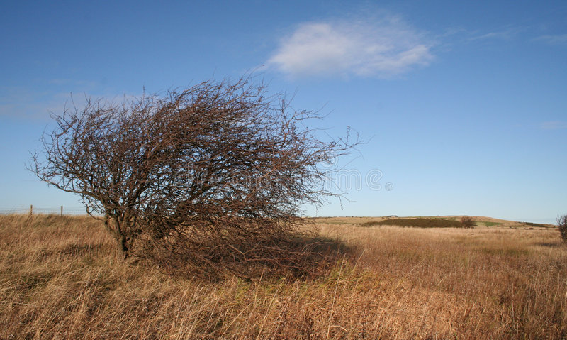 Tough little tree stock photography