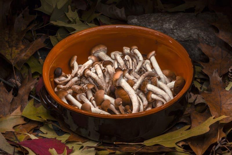 Toujours composition automnale en vie : pot d'argile et champignons de miel image stock