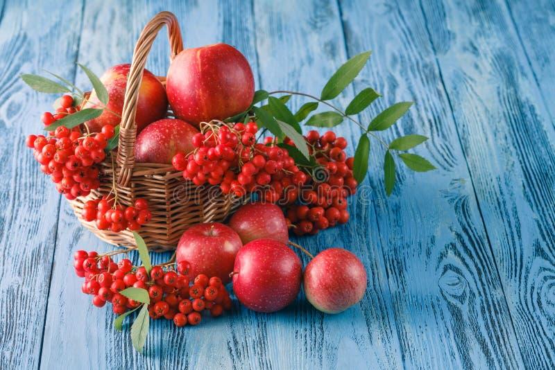 Download Toujours La Vie Automnale Avec Les Pommes Et La Sorbe Photo stock - Image du agriculture, sorbe: 77157092
