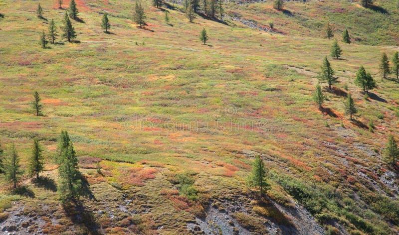 Toundra alpine photo libre de droits