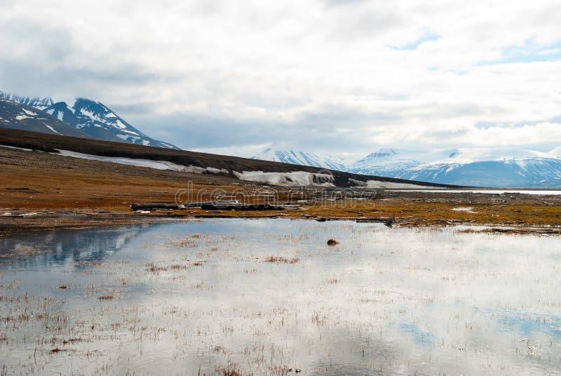 Toundra arctique en été, le Svalbard photographie stock
