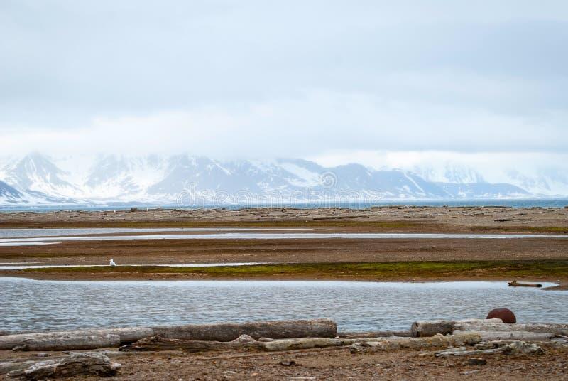 Toundra arctique en été, le Svalbard photographie stock libre de droits