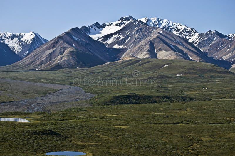 Toundra de Denali photos stock