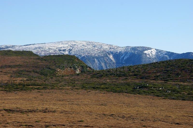 Toundra en Eurasie, automne, neige photos stock