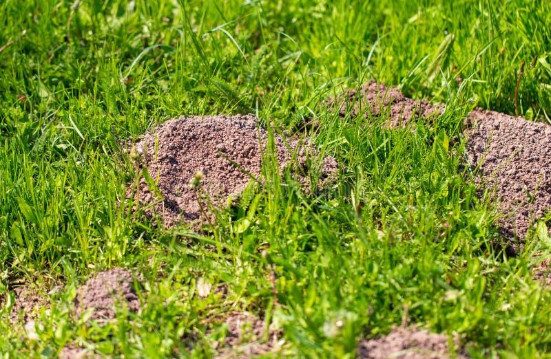 Toupeira escavada na terra na mola imagens de stock royalty free