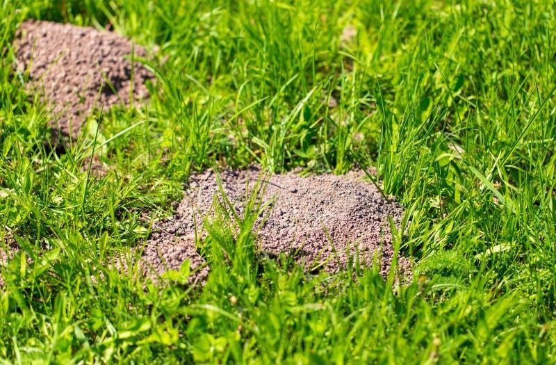 Toupeira escavada na terra na mola fotos de stock royalty free