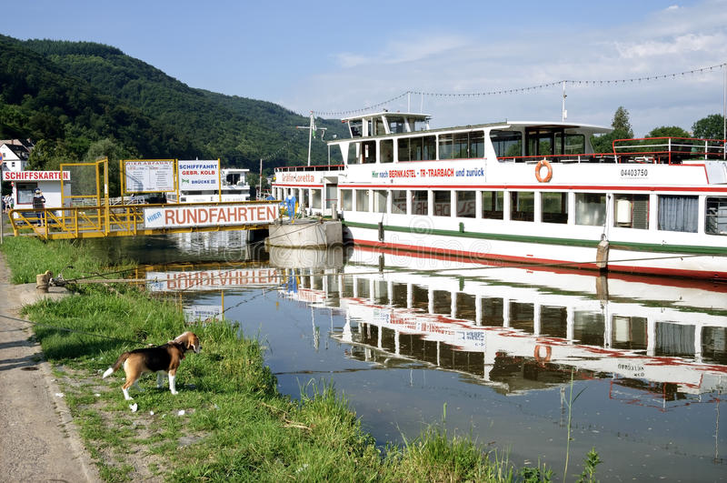 Tour boat and dog on the River Moselle, Germany. Germany, federal state Rhineland-Palatinate, city of Bernkastel-Kues: in this tourist town, wine town on the royalty free stock photo