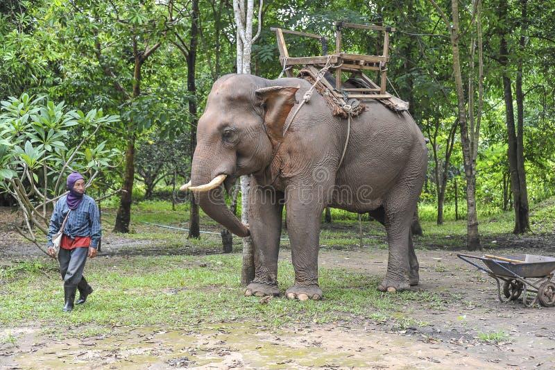 Tour d'éléphant photo libre de droits
