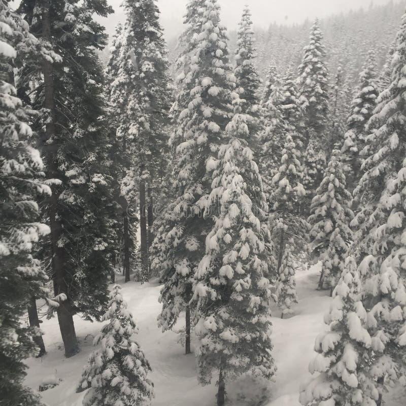 Tour d'hiver photos stock