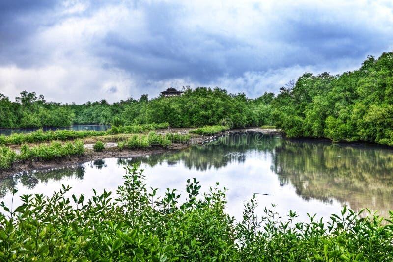 Tour d'observation d'oiseau, Sungei Buloh Singapour photo libre de droits