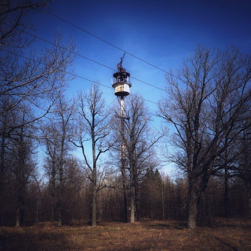 Tour dans la forêt photographie stock libre de droits