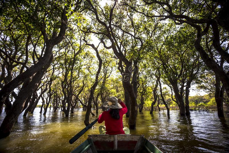 Tour de bateau de palétuvier de Kompong Phluk de sève de Siem Reap Tonle photo libre de droits