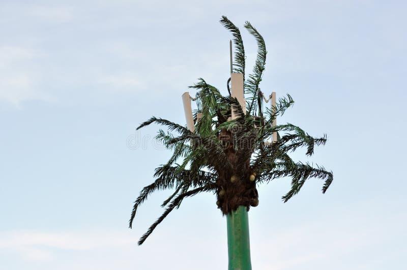 Tour de cellules de palmier photos libres de droits