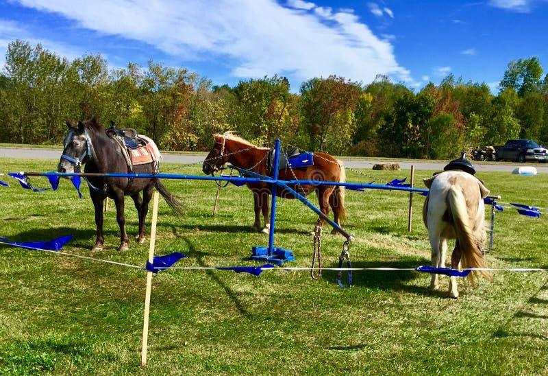 Tour de poney au festival de chute dans Maine image stock