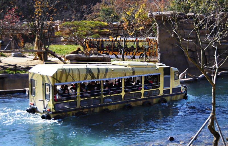 Tour de safari dans Everland, Corée du Sud photos stock