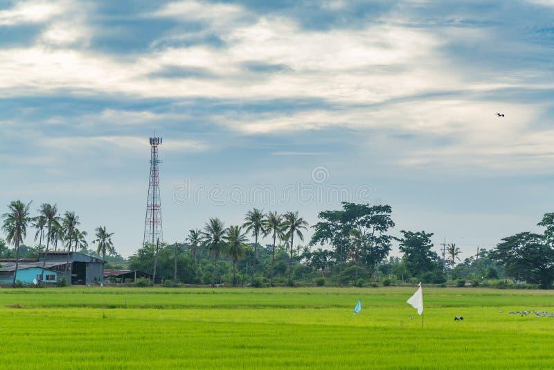 Tour de télécommunication avec le champ de rizière photo stock