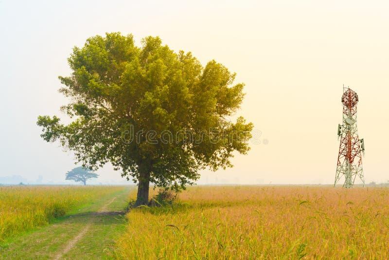 Tour de télécommunication dans le domaine de rizière image stock