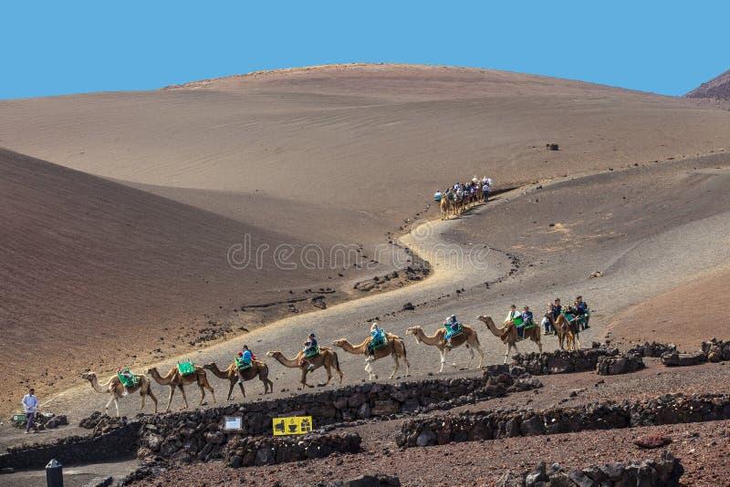 Tour de touristes sur des chameaux étant image stock