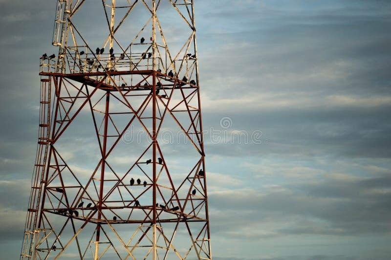 Tour de vautour photos libres de droits