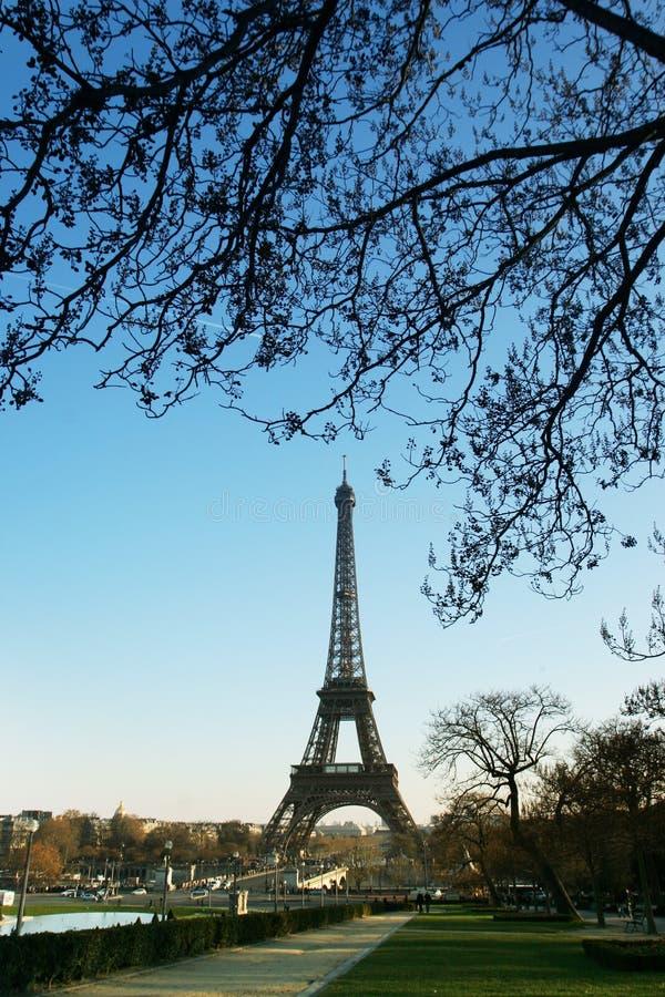 Tour Eiffel sous un arbre photographie stock