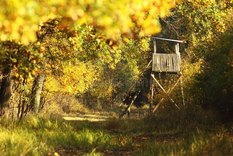 Tour en bois de chasse dans la forêt images libres de droits