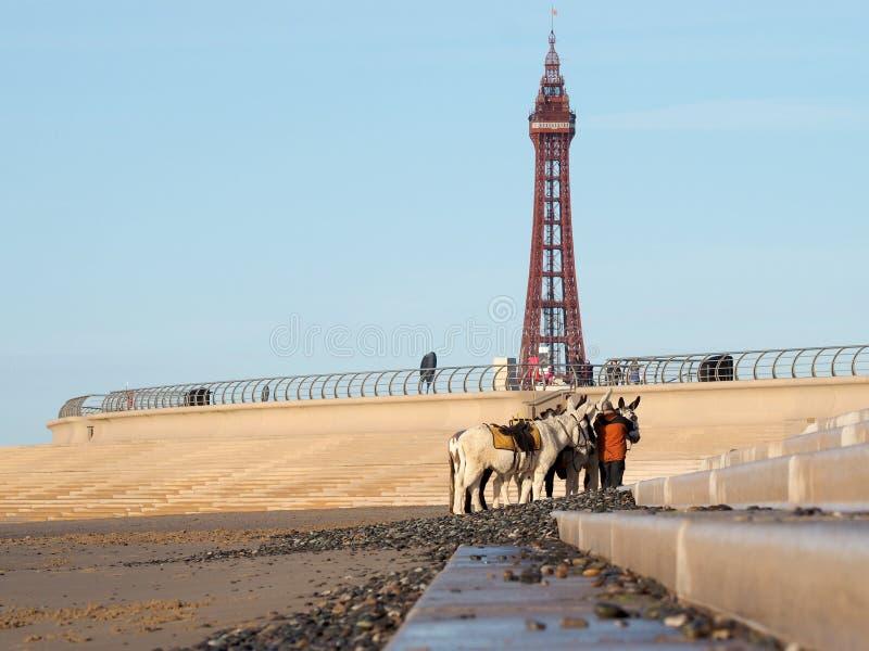 Tour historique de ND d'ânes de Blackpool photos libres de droits