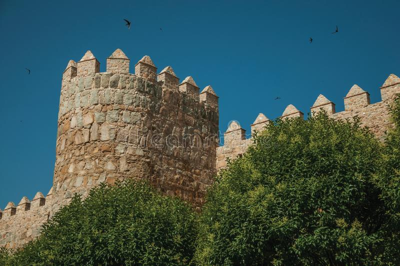 Tour sur le mur de ville et arbres feuillus à Avila photographie stock libre de droits