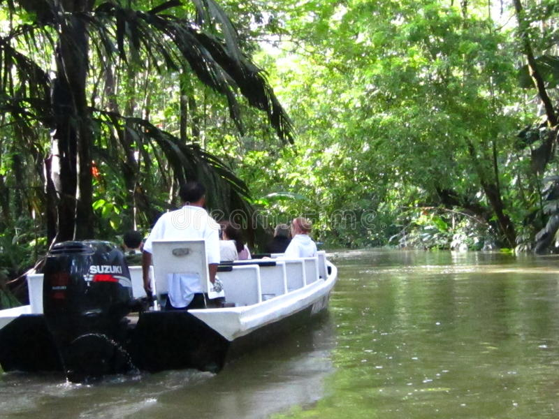 Touris i en mangrove i Costa Rica royaltyfri foto