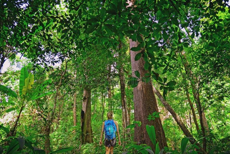 Touris que camina en la selva profunda del parque nacional de Khao Yai en Tailandia imagen de archivo