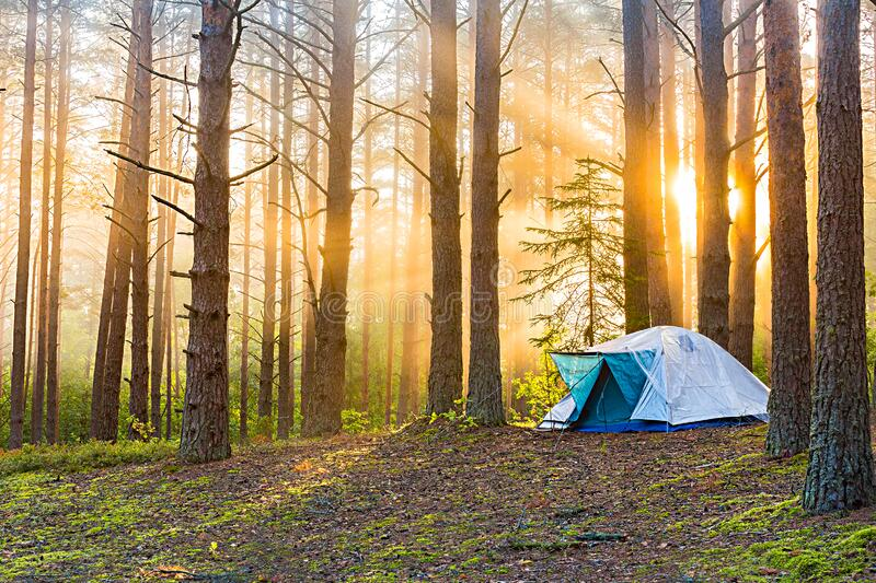 Tourism concept. Dawn in a foggy forest with a lonely tent. Man lives in the forest. Tourism concept. Dawn in a foggy forest with a lonely tent. A man lives in royalty free stock photo