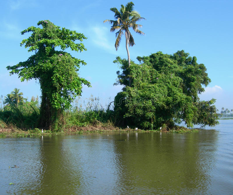Download Tourism In India, Lush Vegetation In Kerala Stock Images - Image: 19062704