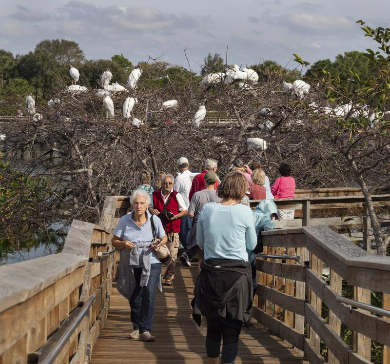 Tourism at Wakodahatchee Wetlands Reserve in Delray Beach stock photography