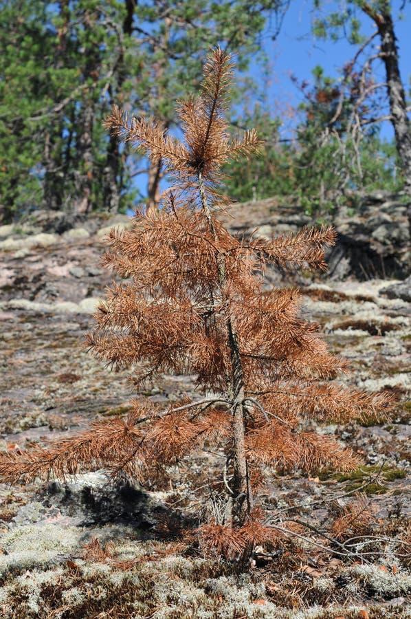 Tourisme dans Karelli Russie images stock