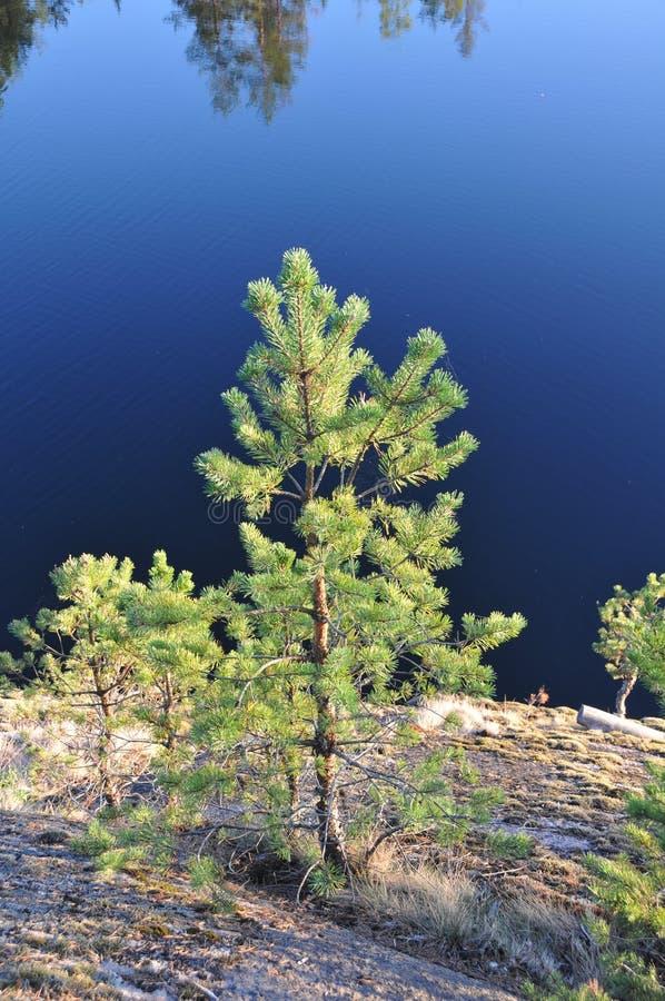Tourisme dans Karelli Russie photo libre de droits