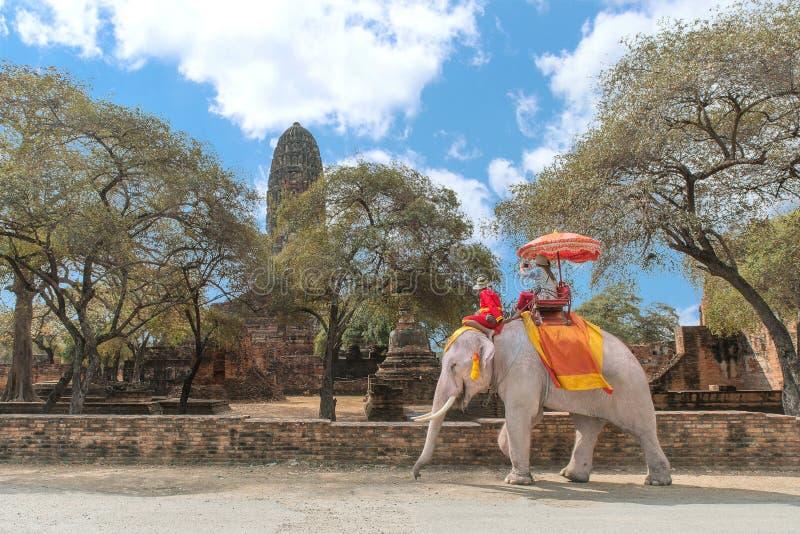 Tourist auf Elefantbesichtigung in historischem Park Ayutthaya, Ay lizenzfreies stockbild