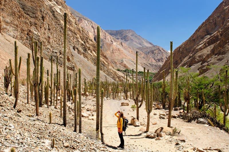 Tourist auf Trekking in Peru lizenzfreie stockfotos