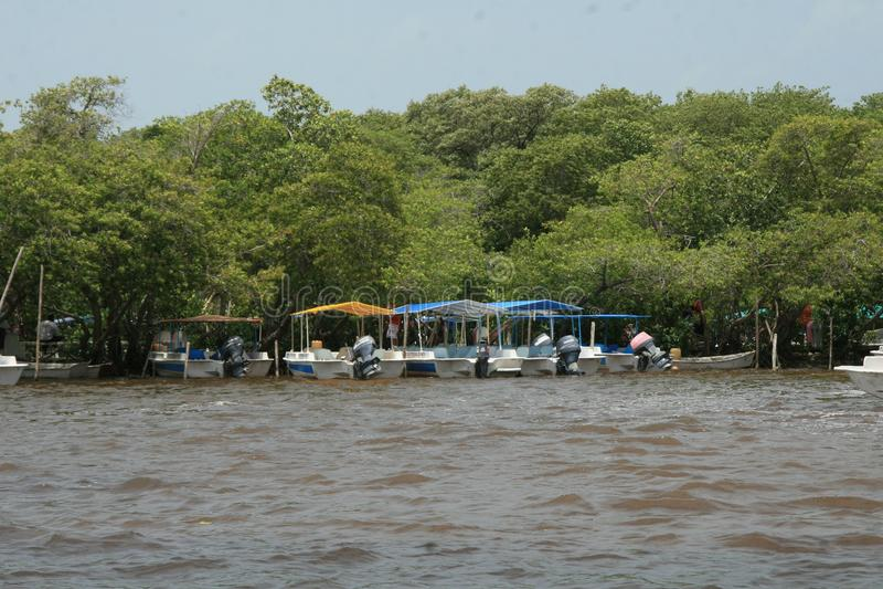 The river habitat at Celestun, Mexico stock photo