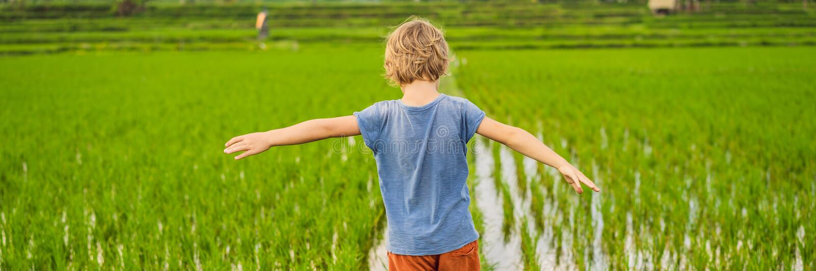 Tourist boy walks in a rice field. Traveling with children concept. Kids friendly place BANNER, LONG FORMAT royalty free stock photos