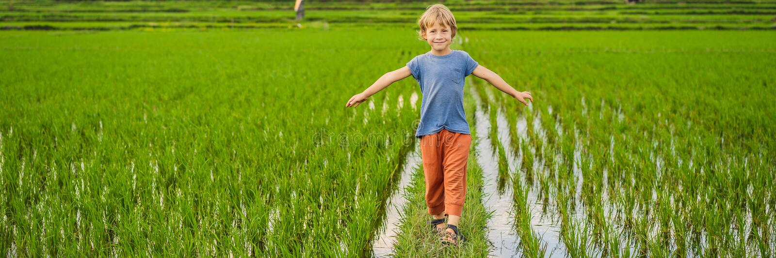 Tourist boy walks in a rice field. Traveling with children concept. Kids friendly place BANNER, LONG FORMAT royalty free stock photo