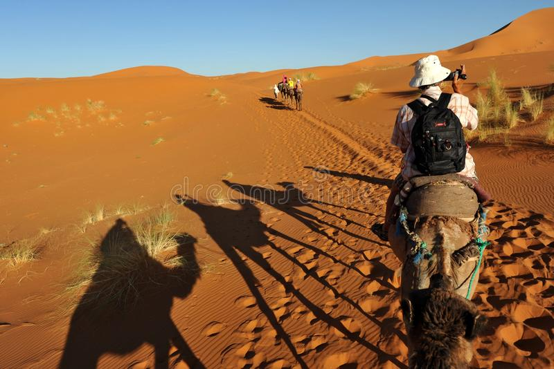 Tourist on camel stock images