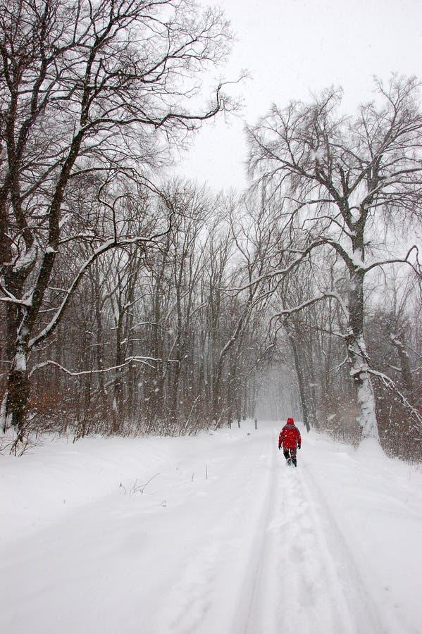 tourist der alleine in winterwald geht stockbild bild von dezember eingefroren 12823259. Black Bedroom Furniture Sets. Home Design Ideas
