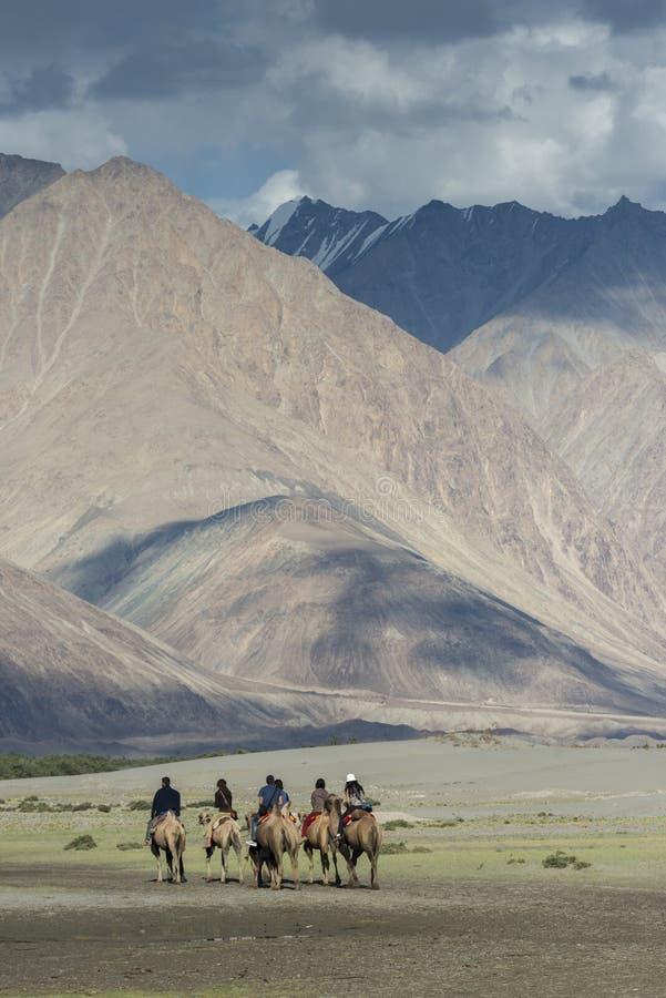 Tourist doing camel ridesin Hunder dunes of Nubra Valley stock photography