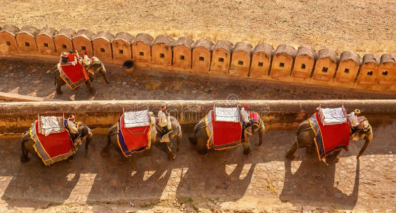 Tourist elephants at the Amber Fort near Jaipur, India. royalty free stock photography