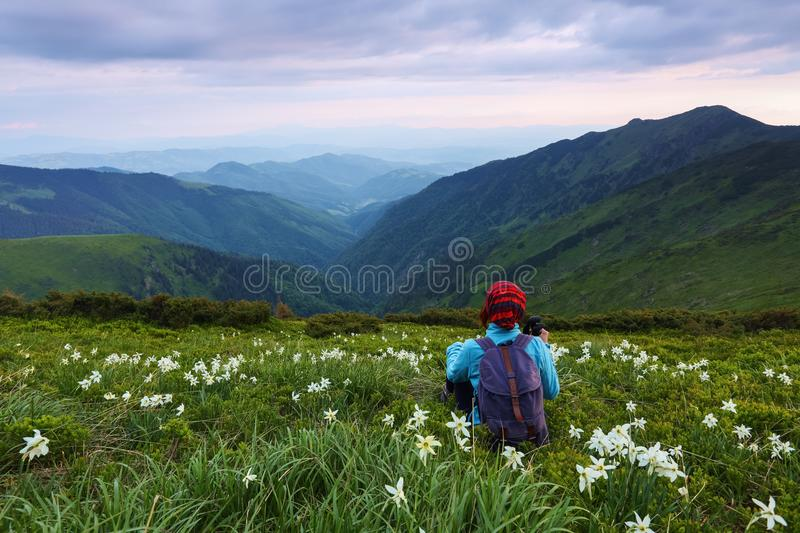 The tourist girl with back sack and tracking sticks sits on the lawn of daffodils. Relaxation. Mountain landscapes. royalty free stock photography