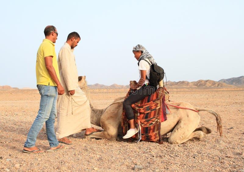 Tourist girl saddling camel for ride stock images