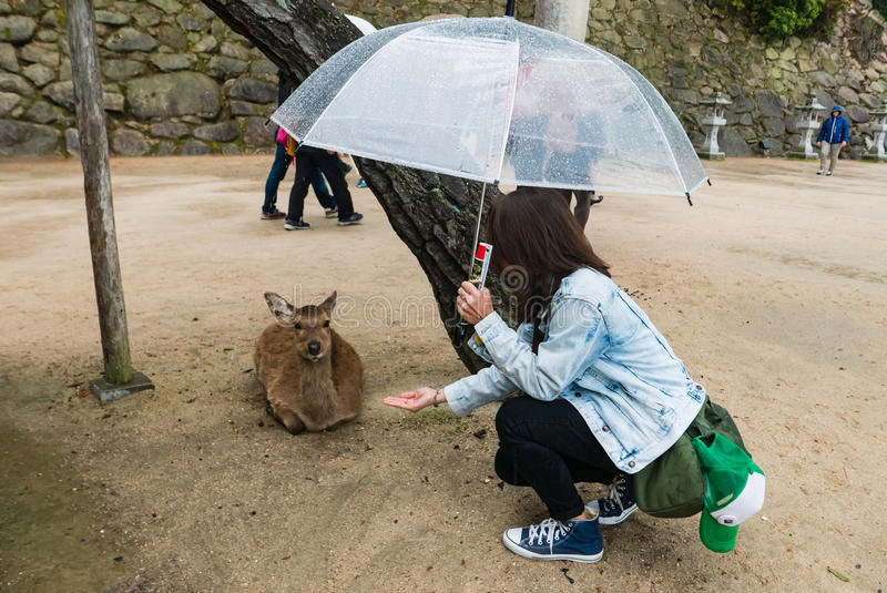 Tourist giving food to the deer royalty free stock photography
