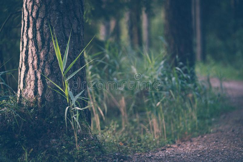 Tourist Hike trail in the Magical Moody Woods - Partly Blurred Photo, Concept of Travel and Tourism. Vintage Film Look royalty free stock photos
