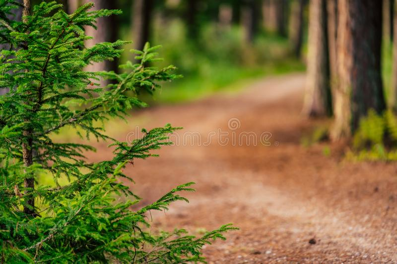 Tourist Hike trail in the Magical Moody Woods on Sunny Summer Day - Concept of the Harmony and Travel. In the Countryside royalty free stock photos