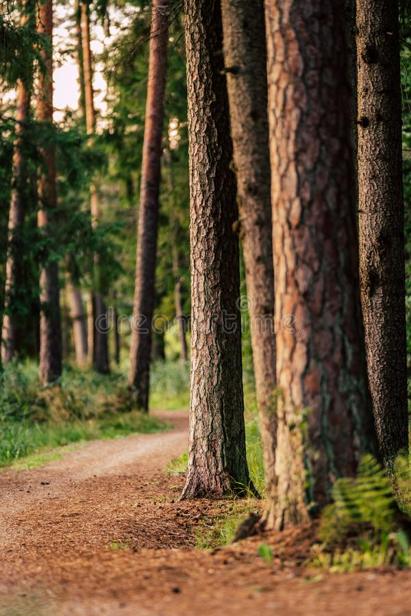Tourist Hike trail in the Magical Moody Woods on Sunny Summer Day - Concept of the Harmony and Travel. In the Countryside royalty free stock image