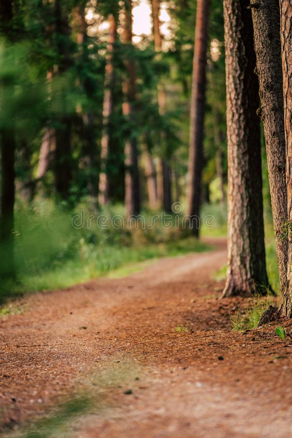 Tourist Hike trail in the Magical Moody Woods on Sunny Summer Day - Concept of the Harmony and Travel. In the Countryside stock image